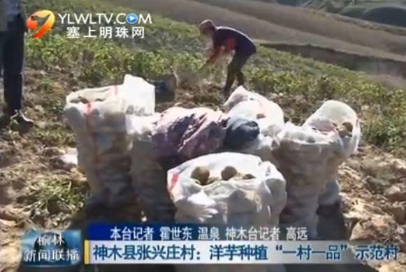 """点击观看《神木县张兴庄村:洋芋种植""""一村一品""""示范村》"""