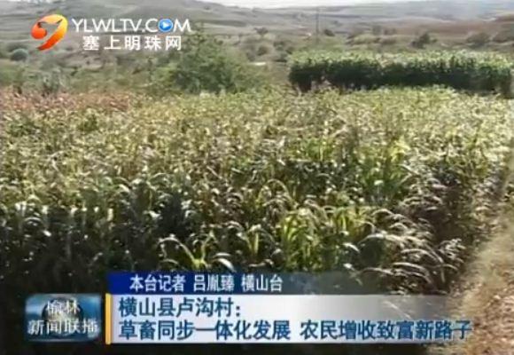 点击观看《横山县卢沟村:草畜同步一体化发展农民增收致富新路子》