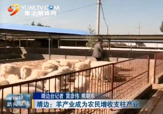 点击观看《靖边:羊产业成为农民增收支柱产业》