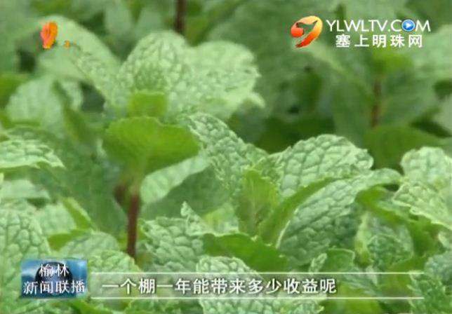 点击观看《榆林现代农业示范园设施果蔬种植引领农户增收致富》