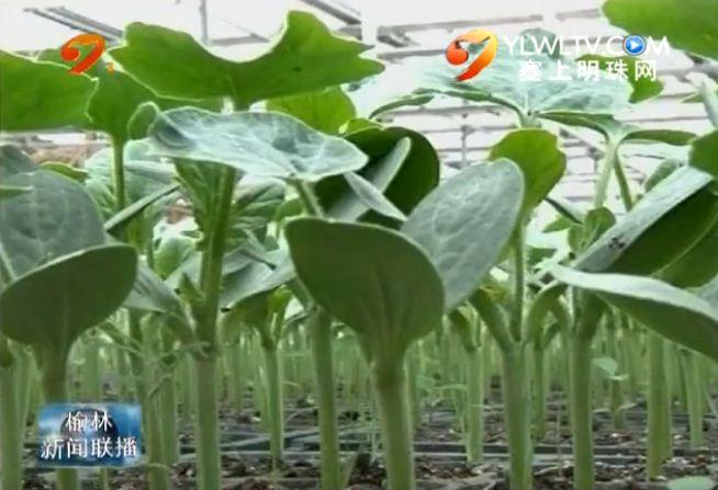 横山:科技助推特色农业发展