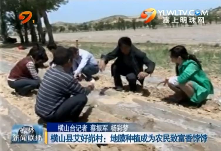 横山县艾好峁村:地膜种植成为农民致富香饽饽