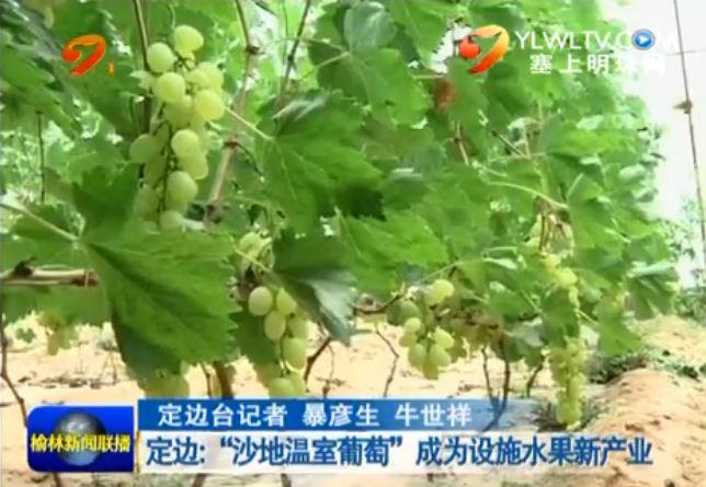 """点击观看《定边:""""沙地温室葡萄""""成为设施水果新产业》"""