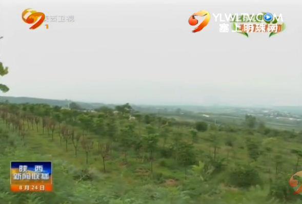 """西安:加强秦岭北麓绿带建设 保护陕西""""绿色心脏"""""""