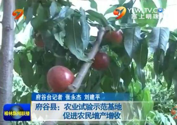点击观看《府谷县:农业试验示范基地促进农民增产增收》