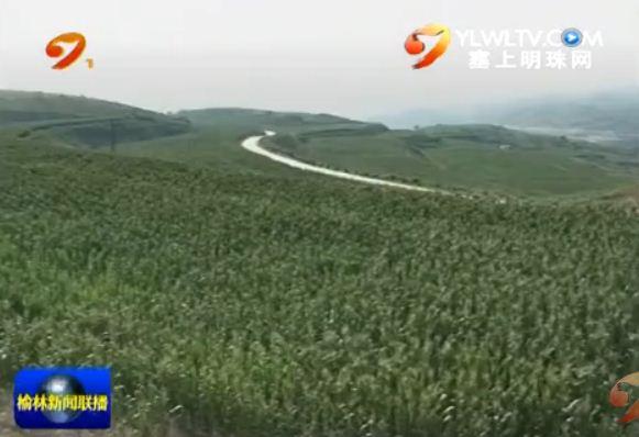 点击观看《横山县杜羊圈村:抓产业 强基础 建设新农村》