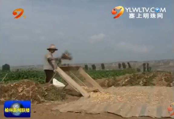 府谷县墙头农业园区千亩花生喜获丰收
