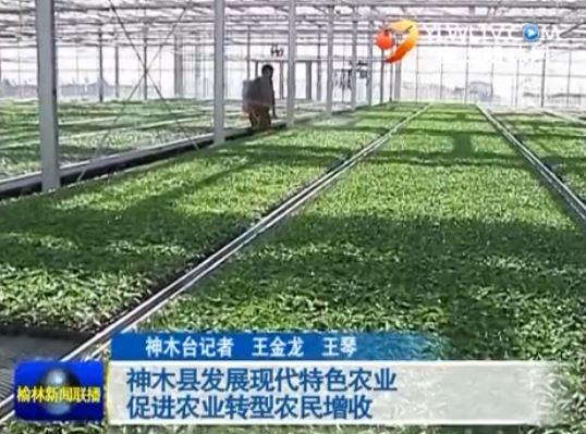 点击观看《神木县发展现代特色农业 促进农业转型农民增收》