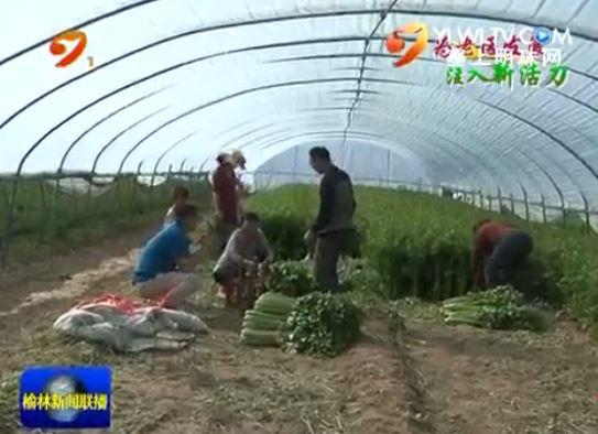 靖边县:构建现代农业发展新格局