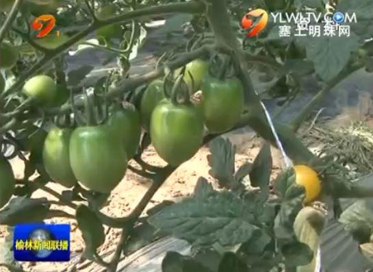 点击观看《定边县:打造地域农产品品牌 提升市场推广竞争力》
