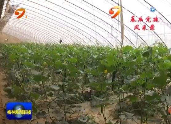 系列报道《基层党建风采录》 清涧县下七里湾村:抓基层党建 促产业发展