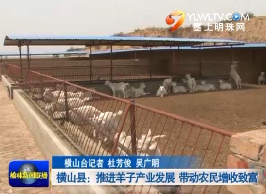横山县:推进羊子产业发展 带动农民增收致富