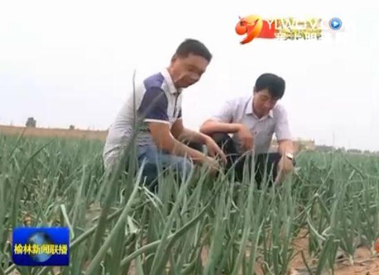 定边县定边镇党委:创新工作机制 抓党建促发展