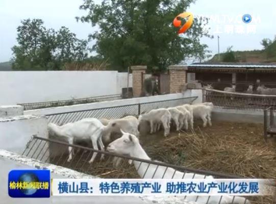 横山县:特色养殖产业 助推农业产业化发展