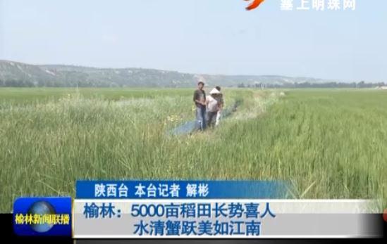 点击观看《榆林:5000亩稻田长势喜人水清蟹跃美如江南》