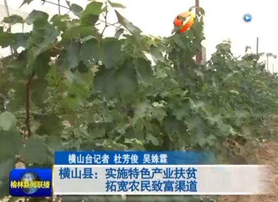 横山县:实施特色产业扶贫拓宽农民致富渠道