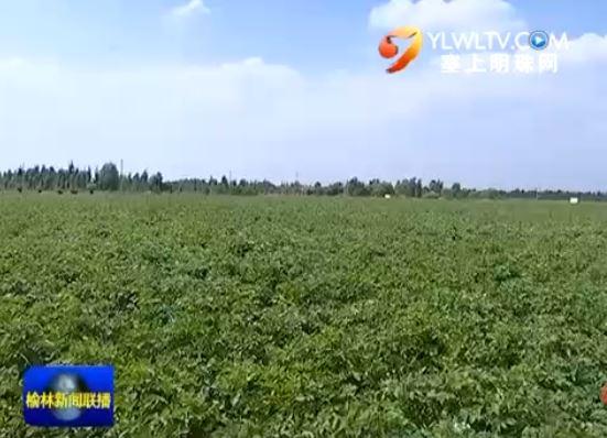 定边县十里沙村:行走塞上绿洲 闻马铃薯花香