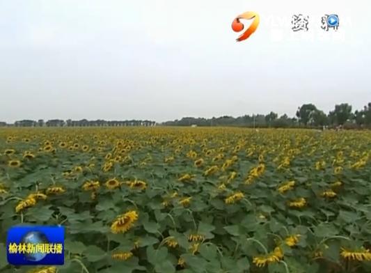 神木县:特色种植助推农业转型发展
