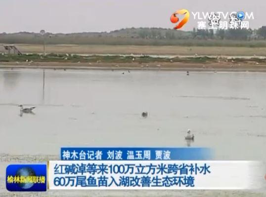 点击观看《红碱淖等来100万立方米跨省补水 60万尾鱼苗入湖改善生态环境》