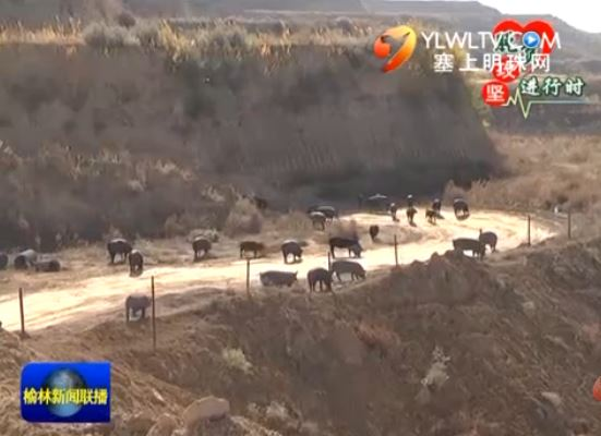 清涧县:388个种养殖合作社助力精准脱贫