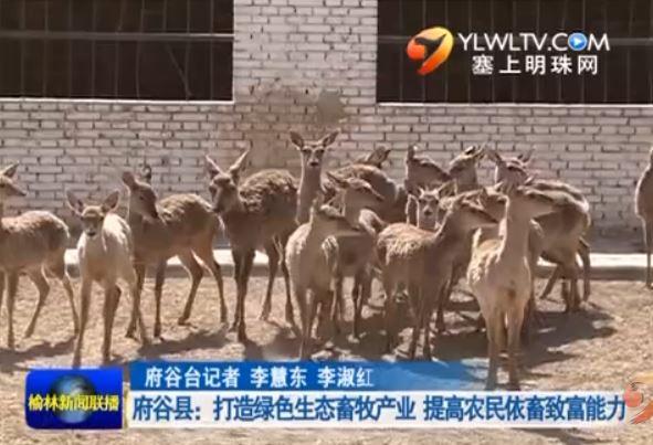 府谷县:打造绿色生态畜牧产业 提高农民依畜致富能力