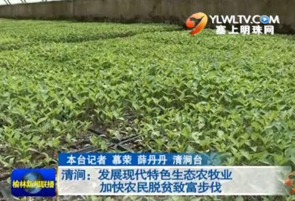 清涧:发展现代特色生态农牧业加快农民脱贫致富步伐