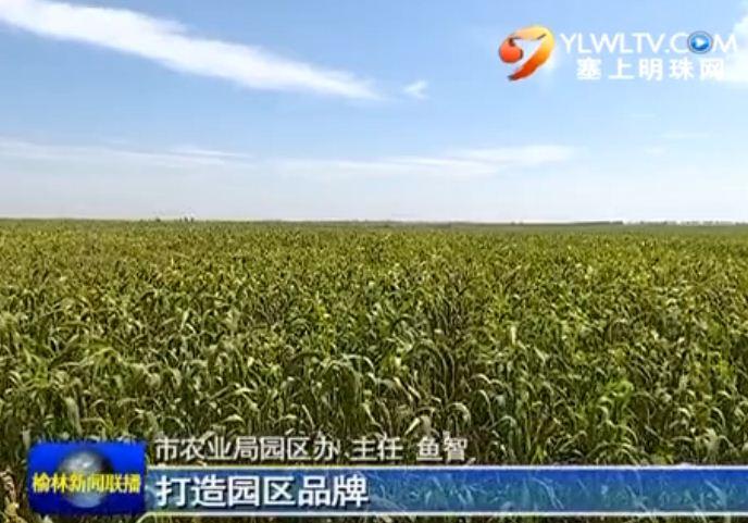点击观看《系列报道《砥砺奋进的五年》 调整区域农业结构 全面发展现代农业》
