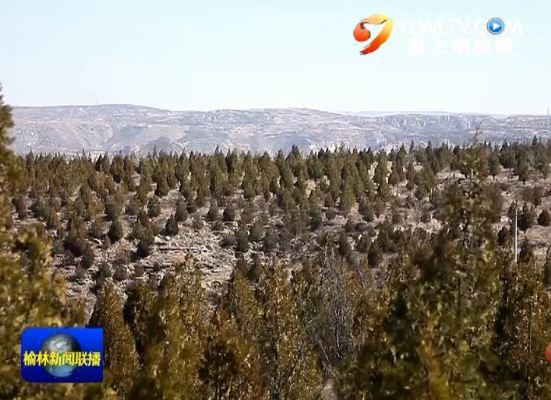 点击观看《神木市 做好森林抚育 提高森林质量》