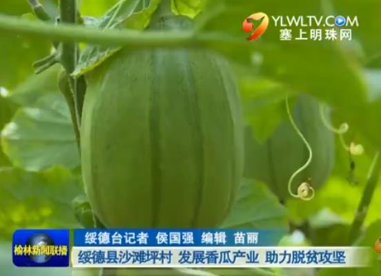 点击观看《绥德县沙滩坪村 发展香瓜产业 助力脱贫攻坚》