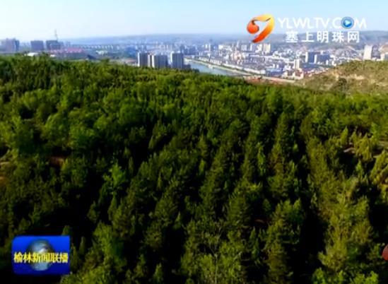 神木 推进造林绿化 提升城市品位