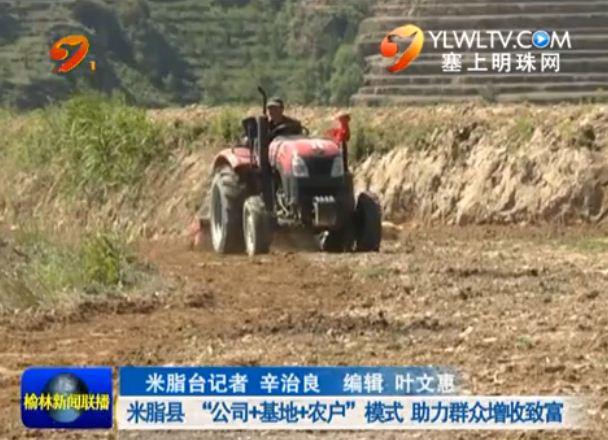 """点击观看《米脂县""""公司+基地+农户""""模式 助力群众增收致富》"""