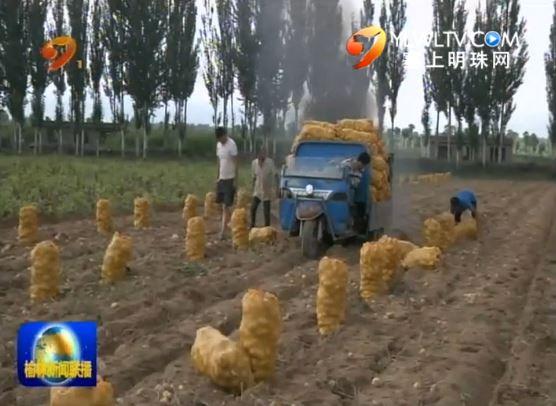 靖边:特色农产品受青睐 订单农业显效益