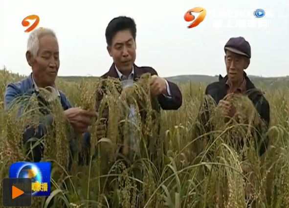 点击观看《府谷县:发展特色种植产业 确保贫困户稳定脱贫》