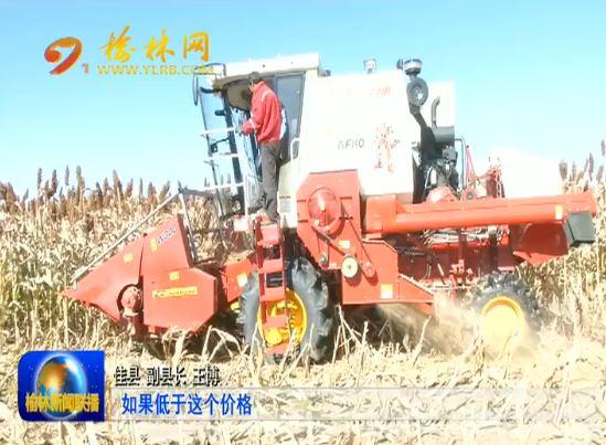 佳县:万亩订单高粱喜获丰收 惠及两千多贫困户