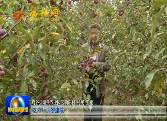 点击观看《府谷:龙头企业主动调结构 海红果农致富有盼头》