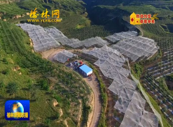 点击观看《米脂县:发展特色产业 助力脱贫攻坚》