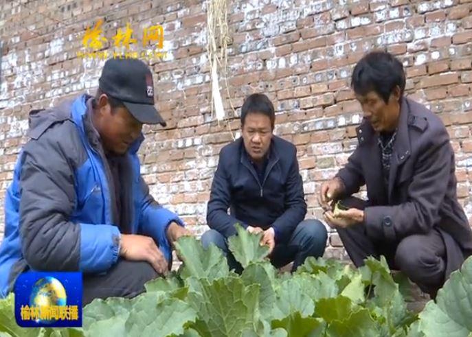 榆阳区:设施农业势头旺 春耕时节春收忙