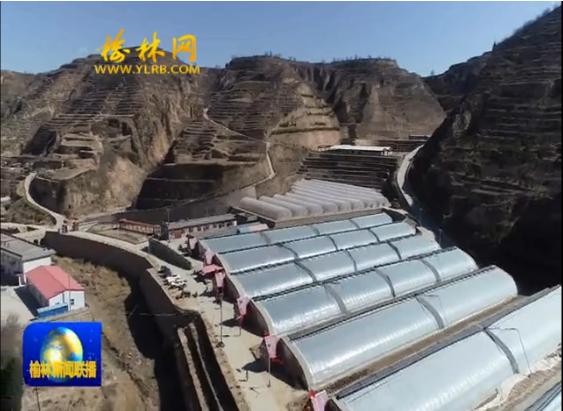 清涧县:设施农业高标准 生态养殖提效益