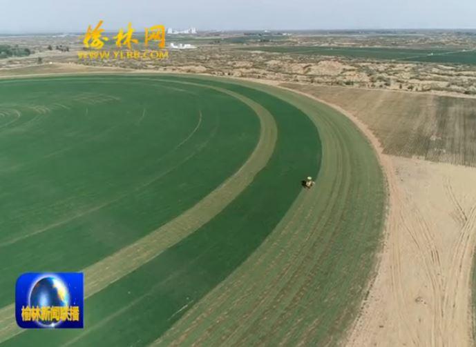 榆林:积极发展草业 绘就生态底色