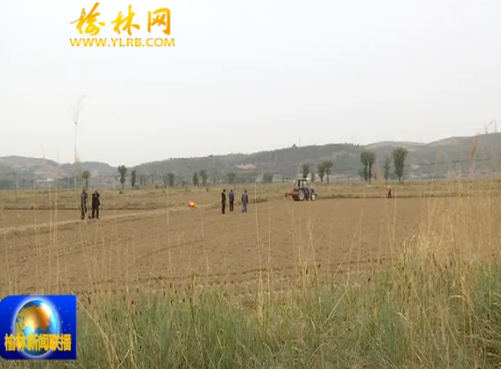 点击观看《横山北庄村蹲点日记(三):规模种植 推动集体产业发展壮大》