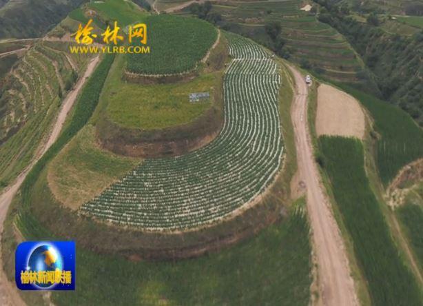 靖边县周河镇:农田改造见实效 作物高产增收益