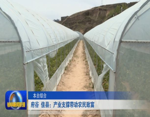 府谷 佳县:产业支撑带动农民致富