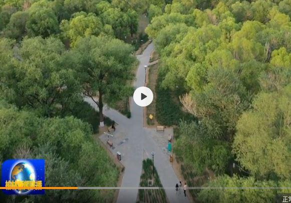 定边:绿化工程扮靓城市底色
