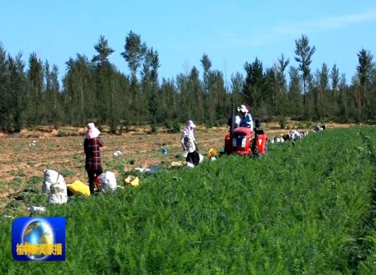 点击观看《榆阳:大漠蔬菜壮大产业富了民》