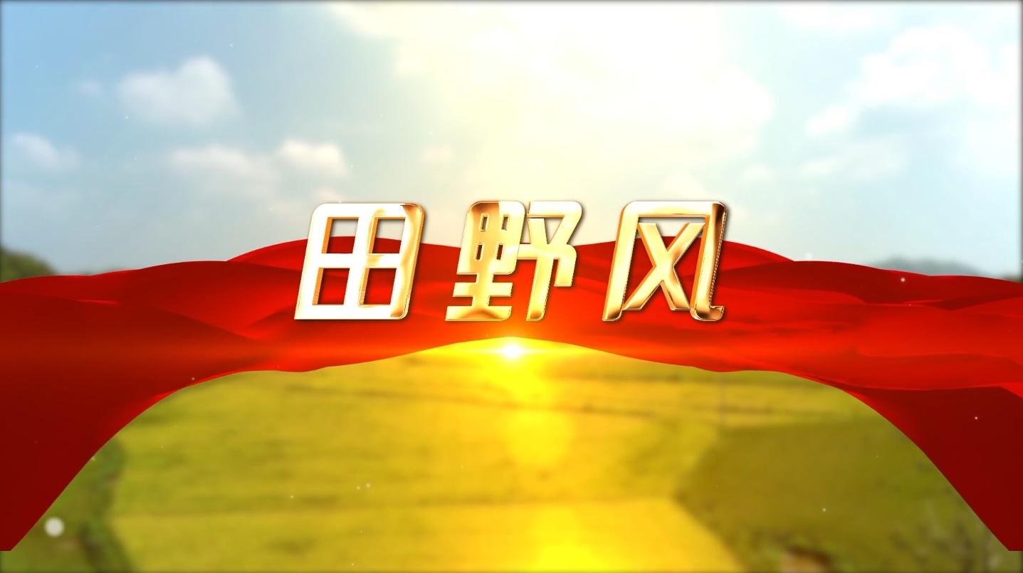 【田野风】接过扶贫接力棒 乡村振兴再起航