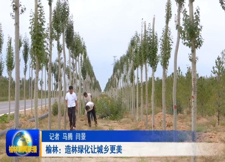 榆林:造林绿化让城乡更美